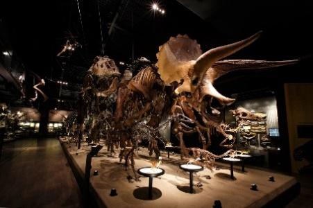 御船町恐竜博物館 TSUTAYA出張展示イベント開催 ~ダイナソーってなんだろーの日 in TSUTAYAさくらの森~